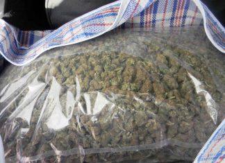 Marihuana Zlatibor